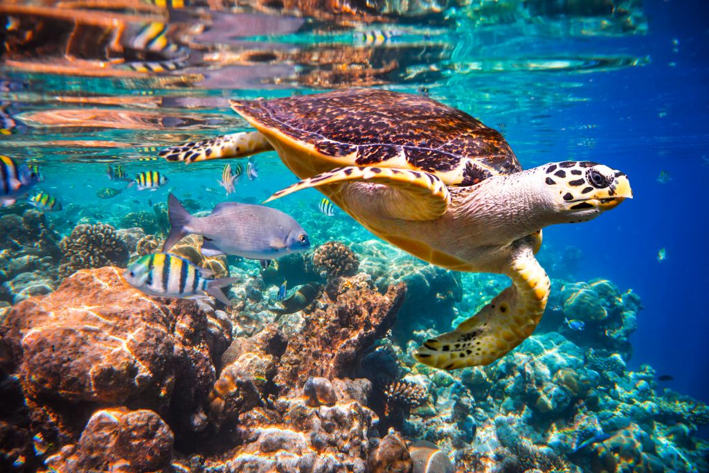 turtle floats under water
