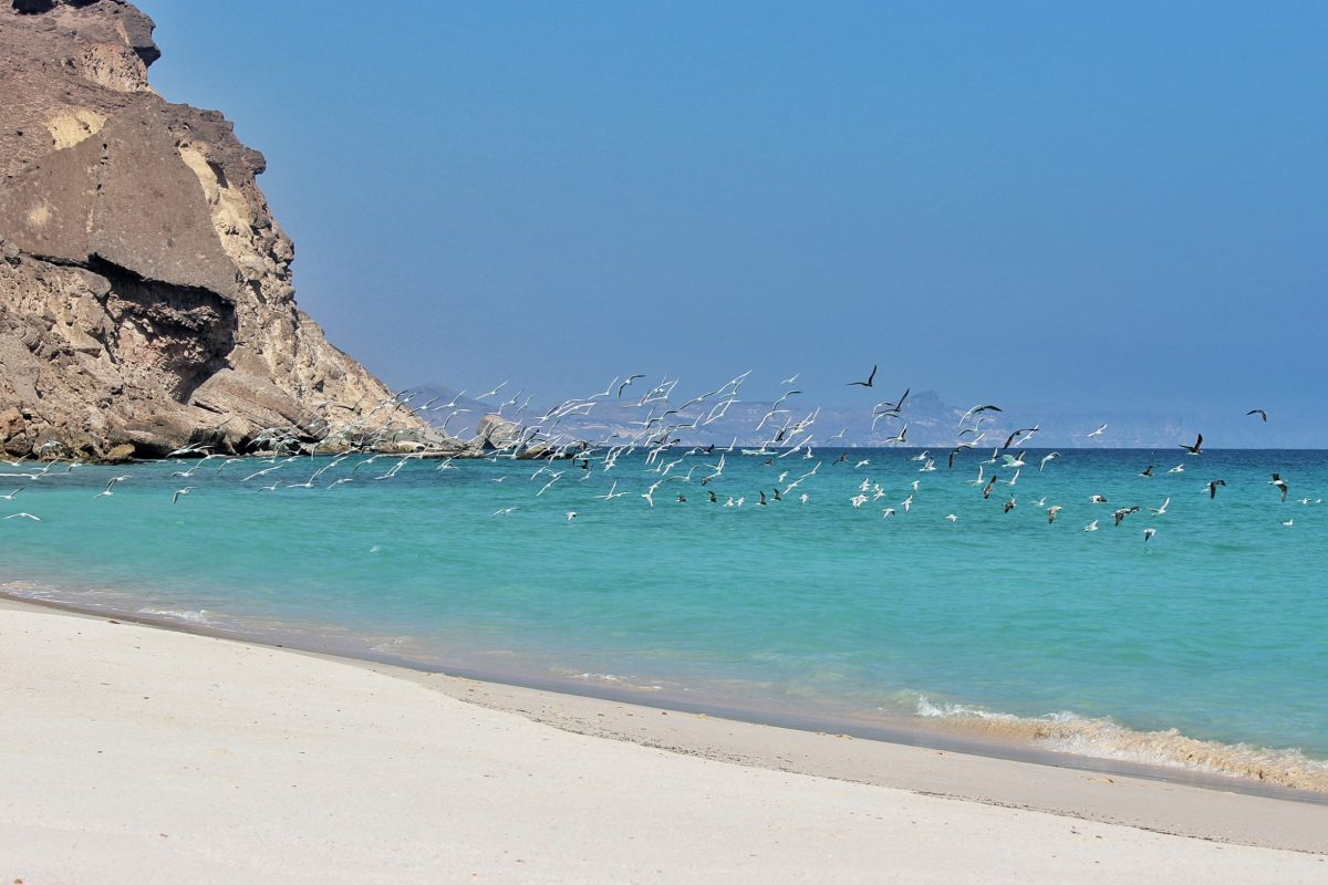 seagulls fly over the white sand, turquoise sea in Salalah, Oman
