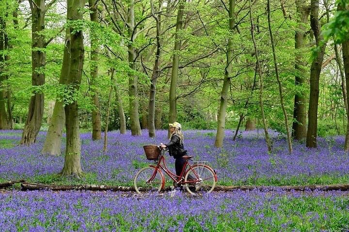 epping forest bluebell wood scenic day trips from london