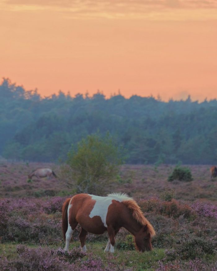 wild pony grazing in the new forest scenic day trips from london