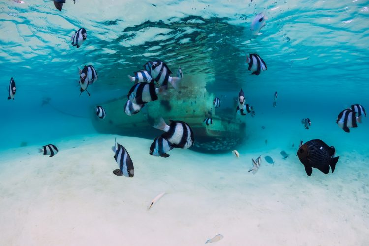 Ocean scene with wreck of boat at sandy bottom and school of fish, underwater in Mauritius. Muslim-friendly island